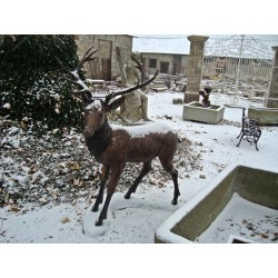 Cerf demi-taille